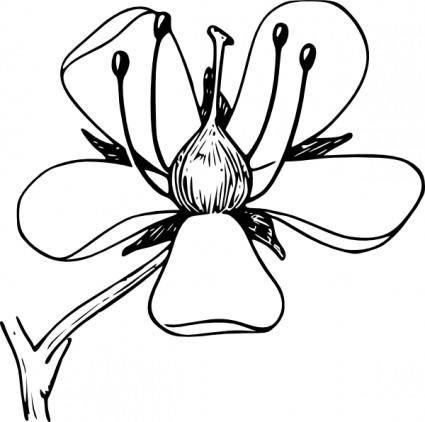 free vector Corolla clip art