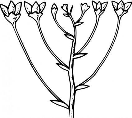 Corymb clip art