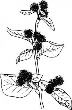 Burdock Flowers Lineart clip art