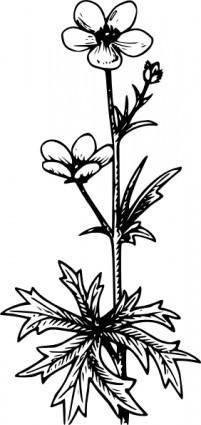 Buttercup clip art