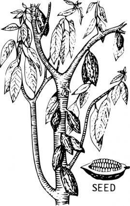 free vector Cacao clip art