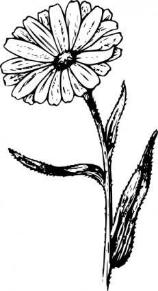 Calendula clip art