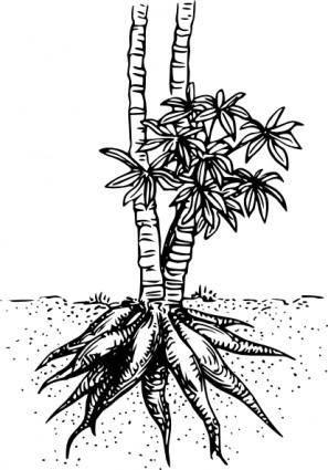 Cassava Yuca clip art
