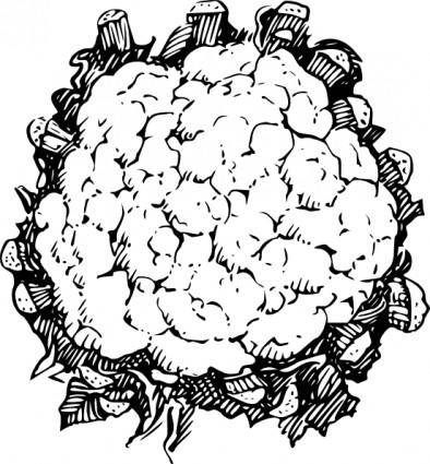 free vector Cauliflower clip art