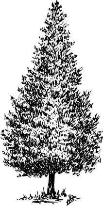 free vector Cedar clip art