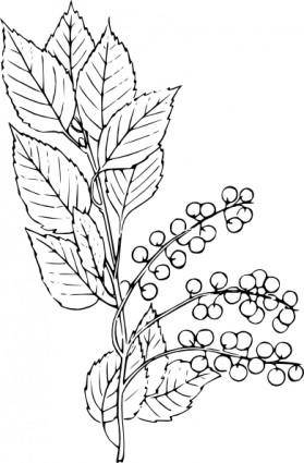 Chokecherry clip art
