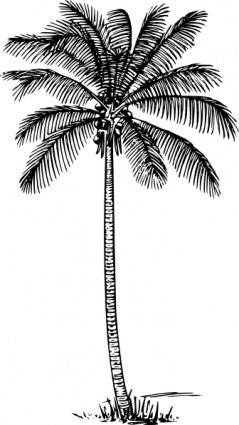free vector Coconut Palm clip art