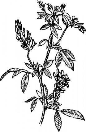 free vector Alfalfa clip art