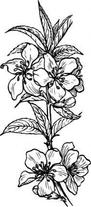 Almond Plant clip art