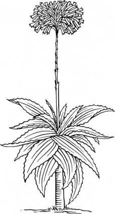 Aloe clip art