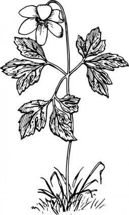 Anemone clip art