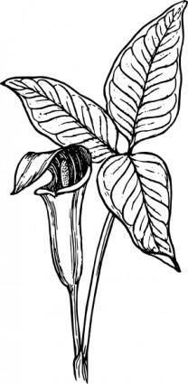 free vector Arum clip art