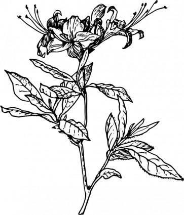 Azalea clip art