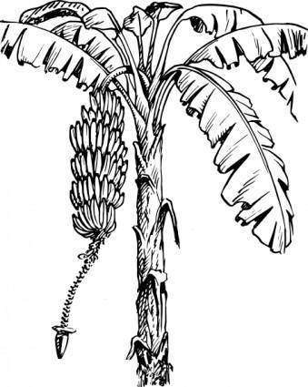 Banana Tree clip art