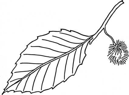 Beech Leaf Outline clip art