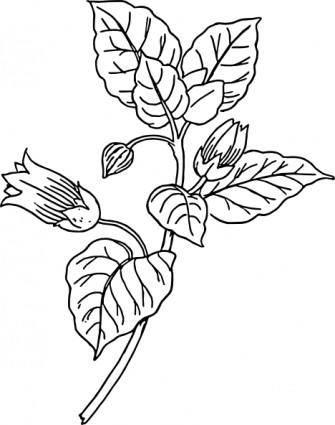 Belladonna clip art
