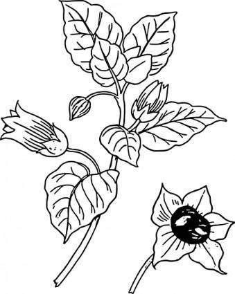 free vector Belladonna clip art
