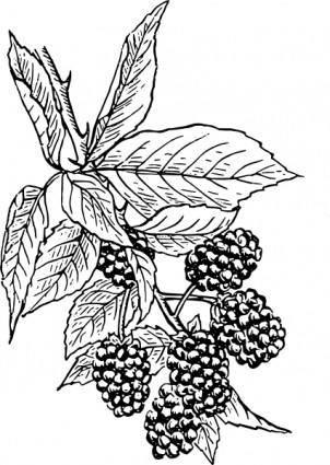 free vector Blackberry clip art