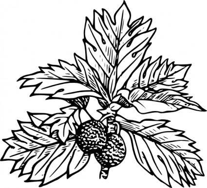 free vector Breadfruit clip art