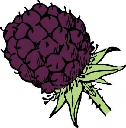 free vector Blackberry  clip art