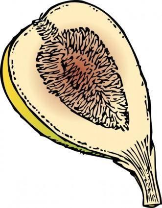 Fig clip art