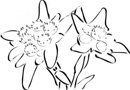 Edelweiss clip art