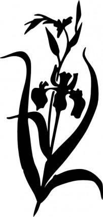 Iris clip art