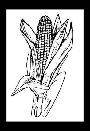 free vector Corn clip art