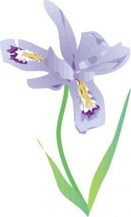 free vector Dwarf Lake Iris clip art