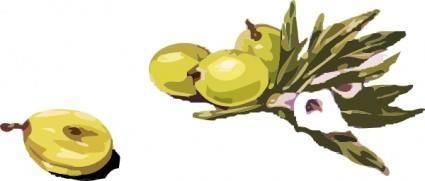Olives clip art