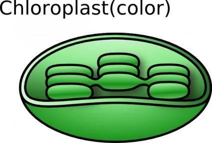 Torisan Chloroplast clip art