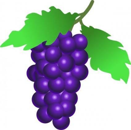 Grapes Vine clip art