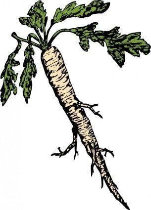 free vector Salsify Food Plants Root clip art