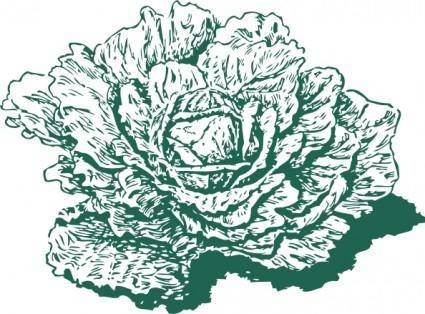 Dutch Cabbage clip art