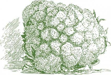 Cauliflower Plant clip art