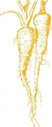 Parsnip clip art