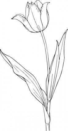Tulip clip art