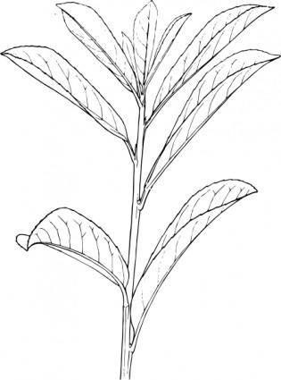 free vector Plant Shrub Outline clip art
