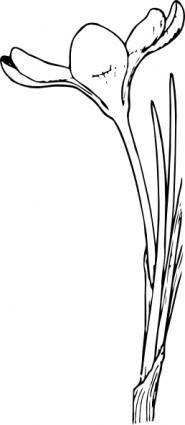 Open Crocus Flower clip art