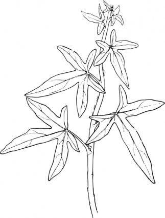 Outline Ivy Plant clip art