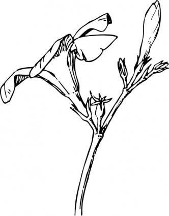 free vector Oleander Flower And Bud clip art
