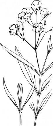 free vector Oleander Outline clip art