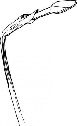 free vector Budding Plant clip art