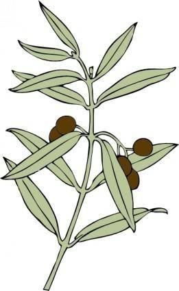 Olive Branch clip art 114975