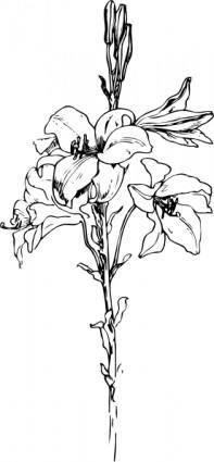 Lily clip art