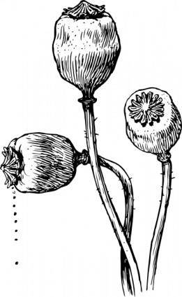 Poppy Heads clip art