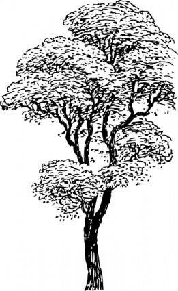 free vector Tall Tree clip art
