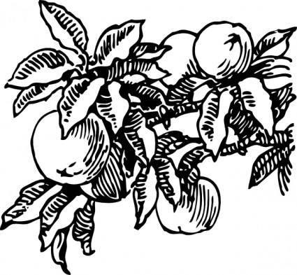 free vector Peaches clip art