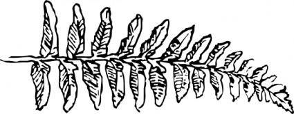 free vector Fern Branch clip art