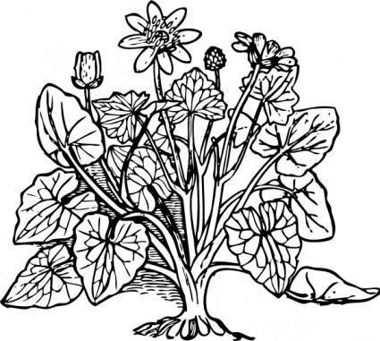 Lesser Celandine clip art